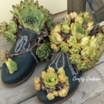 boot planters from old duck boots planted with hens & chicks at craftygardener.ca