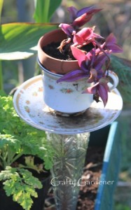 think outside the pot - craftygardener.ca