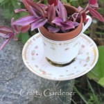 create a teacup planter at craftygardener.ca