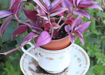 The Craf-tea Cup Planters