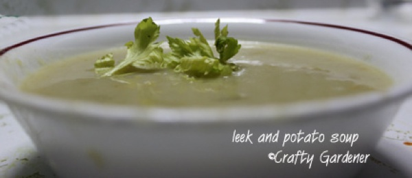 leek and potato soup at craftygardener.ca