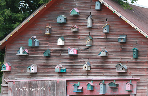 birdhouse bldg1