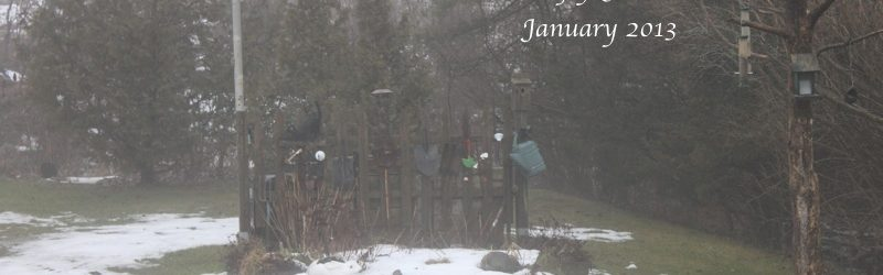 January – The Fence Garden