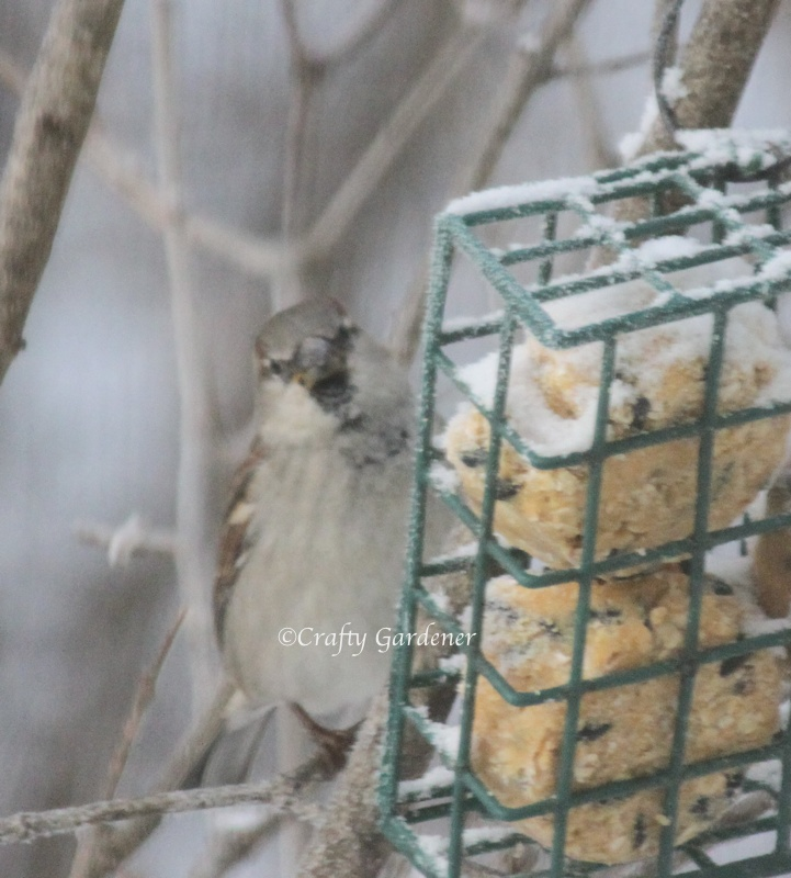 all season suet at craftygardener.ca