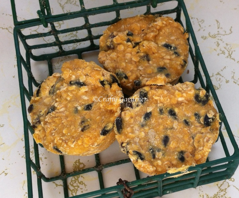suet muffins for the birds at craftygardener.ca
