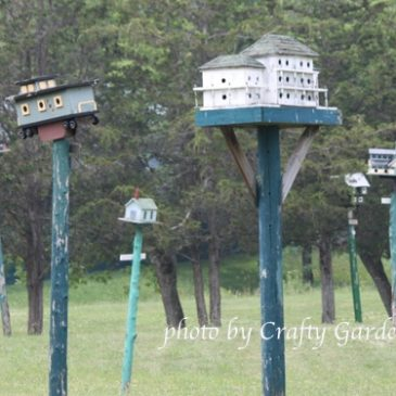 Birdhouse City