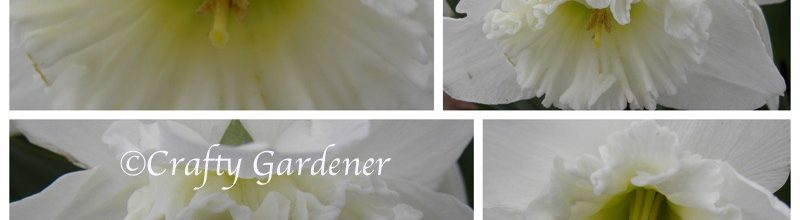 A Narcissus By Any Other Name …