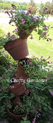 tipsy pots planted with torenia