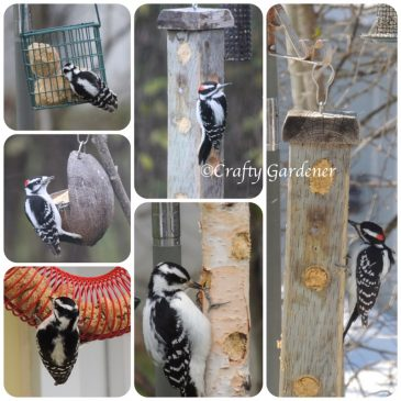 W for Woodpeckers