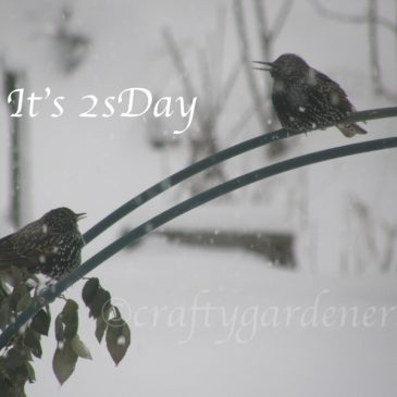 2sDay Starlings