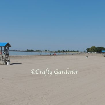 Cobourg Beach Daycation