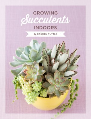 Growing Succulents Indoors by Cassidy Tuttle