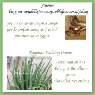 Seed Bag Topper – Printable Egyptian Walking Onions