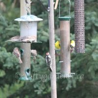 The Feeders are Busy