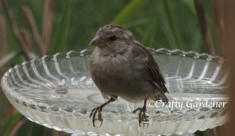 birdbath made from old glass dishes at craftygardener.ca
