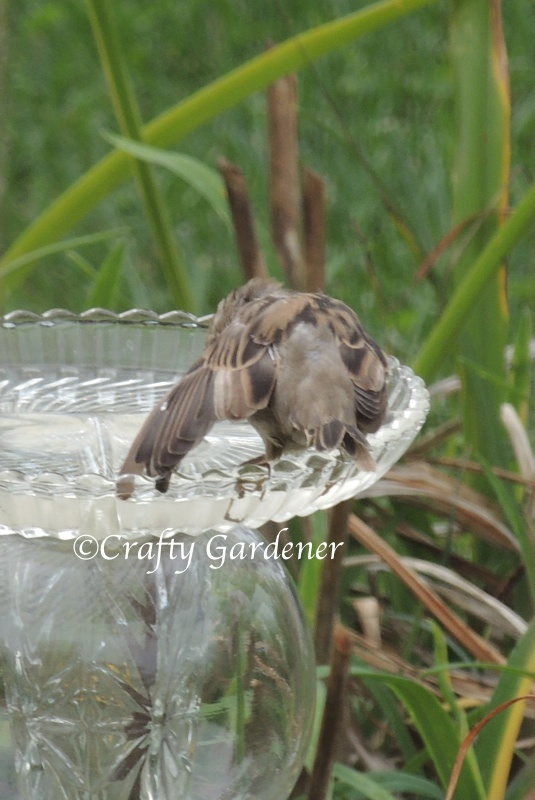 the old glass birdbath at craftygardener.ca