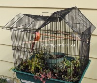 birdcage planter at craftygardener.ca