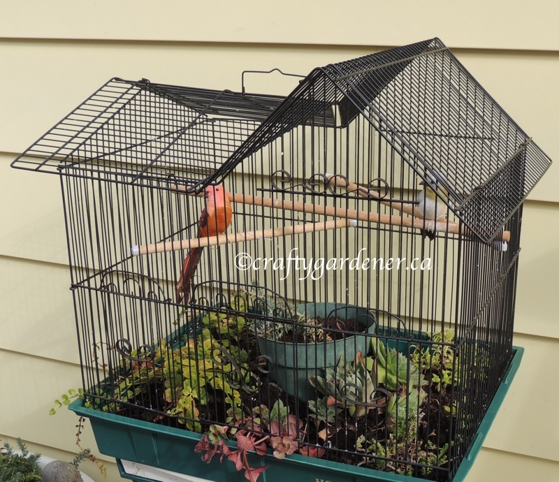 New Life for an Old Birdcage