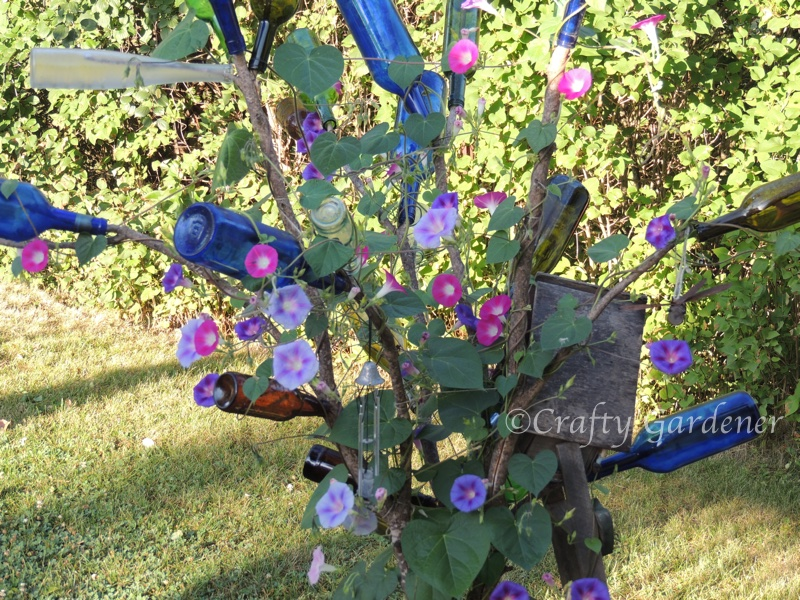 the 'glory'ious bottle tree at craftygardener.cs