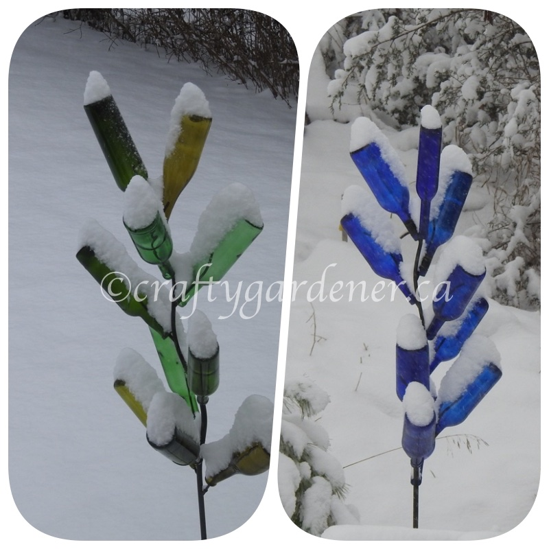 snow on the bottle trees at craftygardener.ca