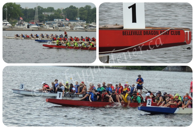 dragon boat races at Belleville, Ontario