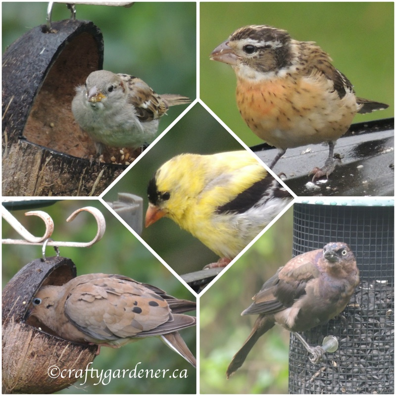 at the feeders - craftygardener.ca