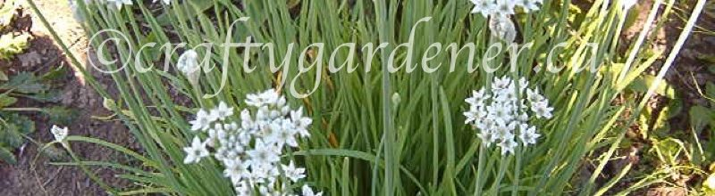 Garlic and Garlic Chives for G