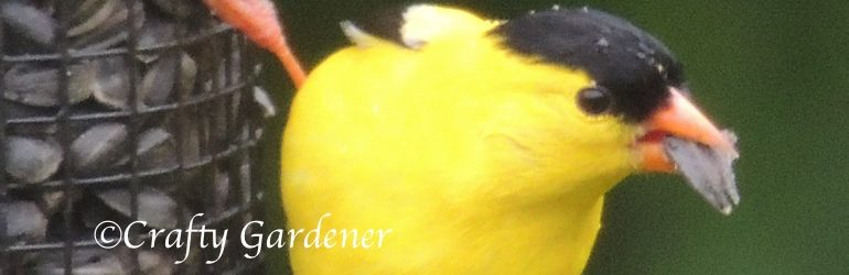 G for Goldfinches