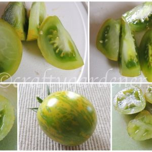 growing green zebra tomatoes at craftygardener.ca