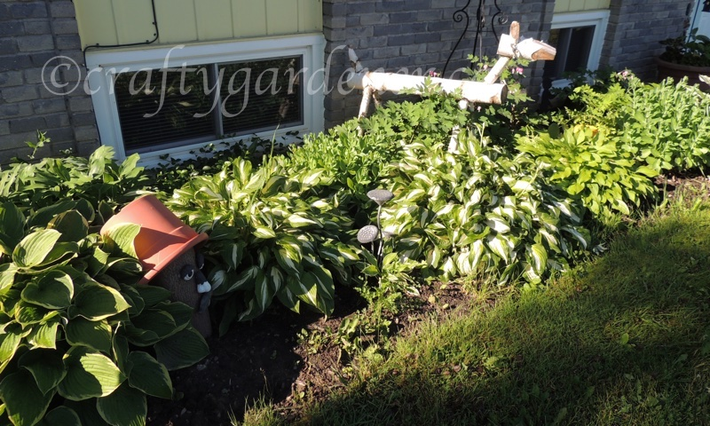 the hosta garden at craftygardener.ca