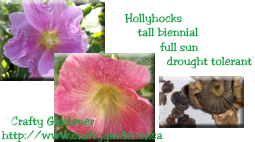 Seed Label Printable Hollyhocks