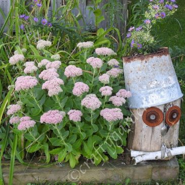 The Log Owl