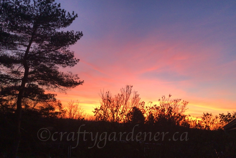 November 7, 2020 sunset at craftygardener.ca