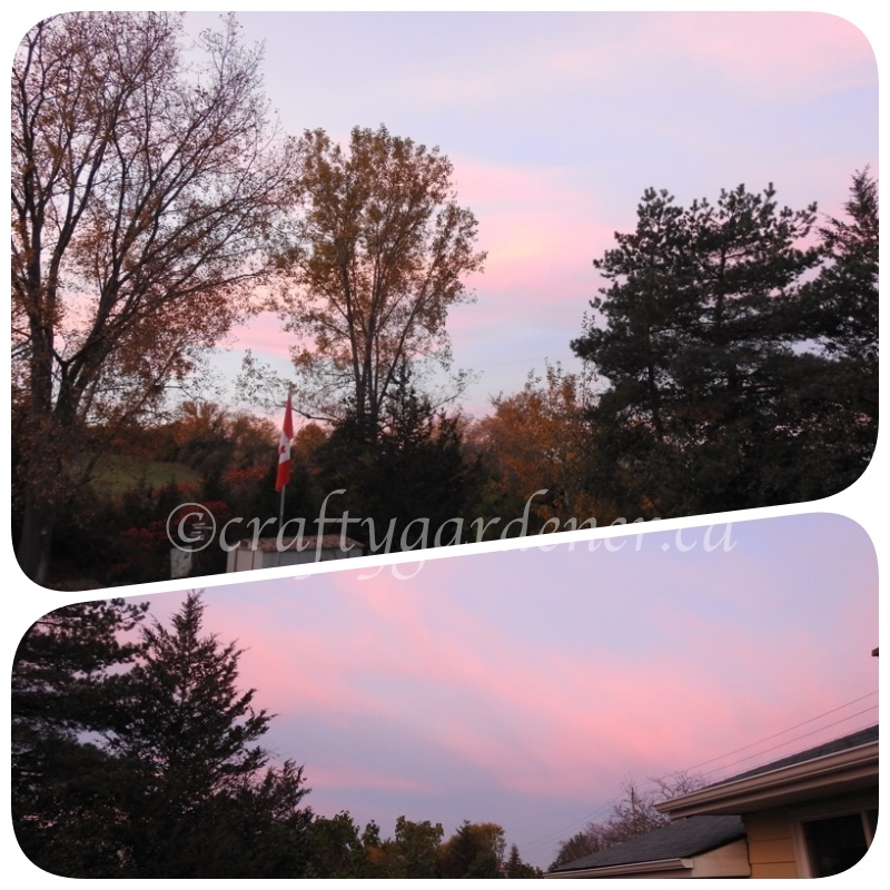 red sky in the morning of October 23, 2017 at craftygardener.ca