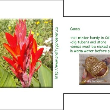 Seed Packet Printables – Canna