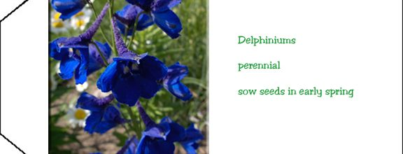 Seed Packet Printable Delphiniums