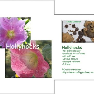 Seed Packet Printable Hollyhocks