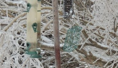 Feeders Around the Garden