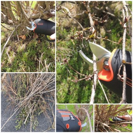 Black +Decker cordless pruner