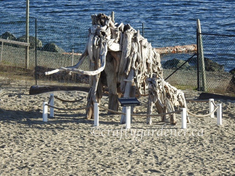 The mammoth at Royal Bay Beach in British Columbia