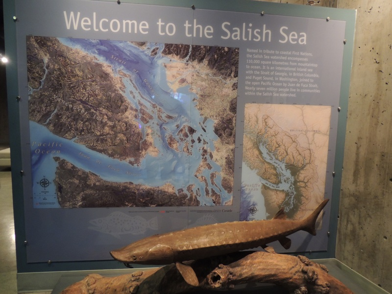 The Shaw Centre for the Salish Sea in Sidney, British Columbia