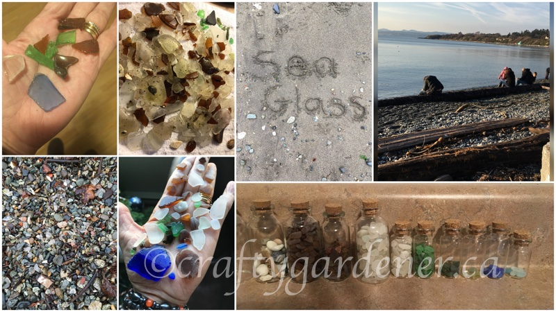 collecting sea glass at craftygardener.ca