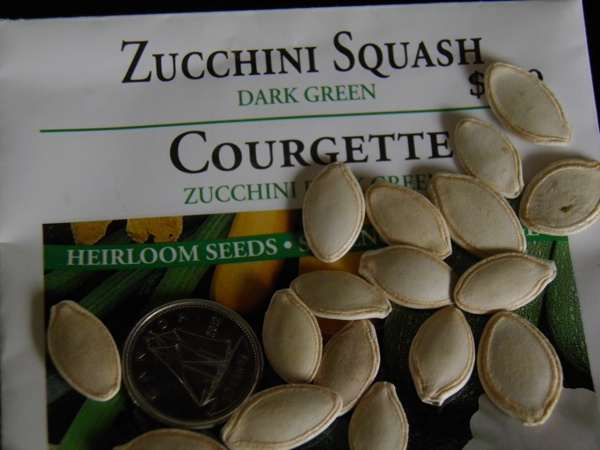 zucchini seeds - info from craftygardener.ca