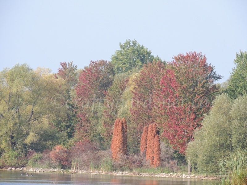 Fall colours by craftygardener.ca