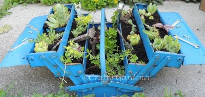 create a sedum planter out of an old toolbox at craftygardener.ca