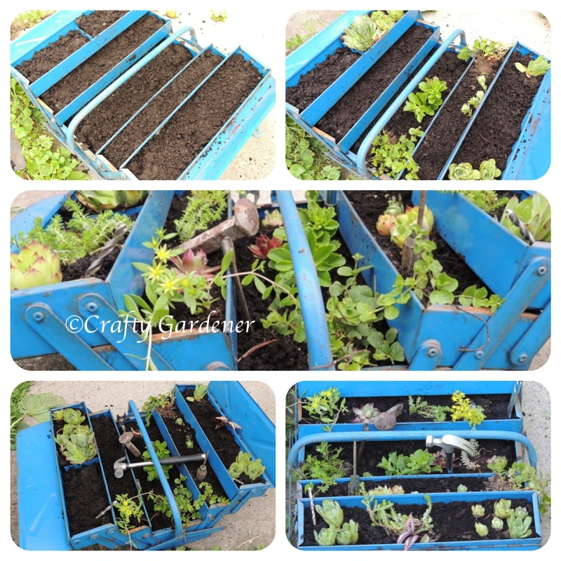 ann old toolbox ... dirt added ... plants added ... a tool box planter