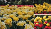 Ottawa Tulip Festival May 2015