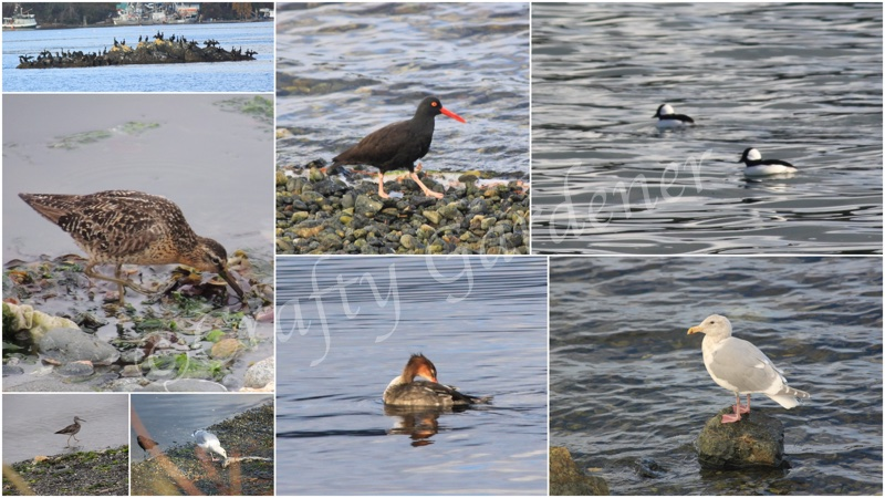 bird watching at Whiffin Spit, Sooke, British Columbia