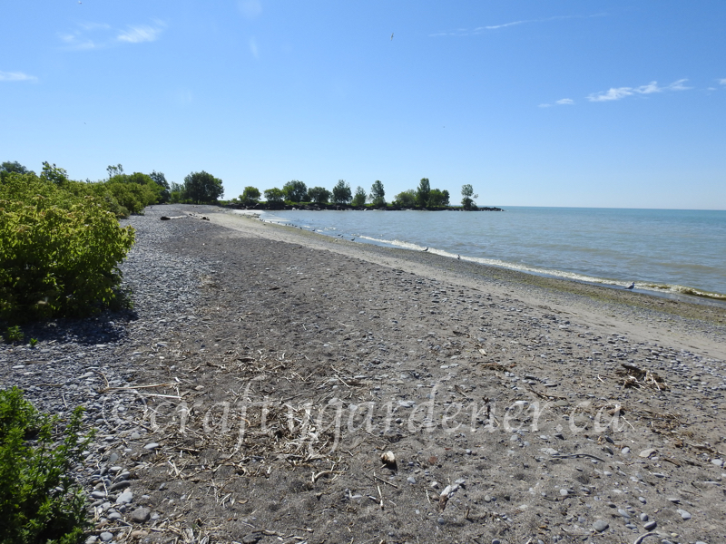 a visit to Cobourg West Beach, Cobourg Ontario
