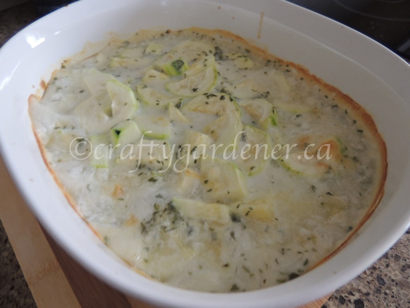 a zucchini in white sauce recipe at craftygardener.ca